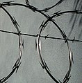 Concertina wire close-up.jpg
