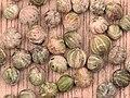 Cornus sanguinea seeds, Rode kornoelje zaden.jpg