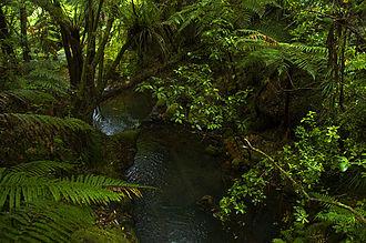 Coromandel Peninsula - Rain forest reserve, interior of Coromandel Peninsula