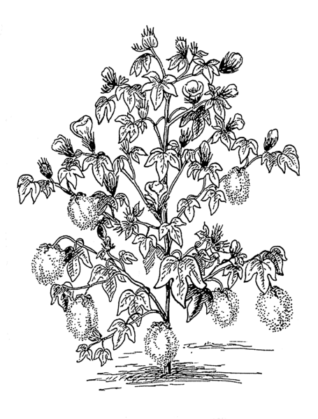 Dogwood Tree Coloring Page