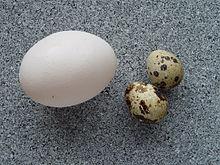 Un uovo di gallina confrontato con due uova di quaglia.