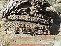 Coupe partielle d'un nid de vespa velutina..JPG