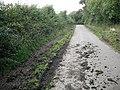 Cow path, Hag Brae - geograph.org.uk - 1483202.jpg