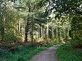 Creech Woods - geograph.org.uk - 1021975.jpg