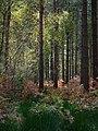 Creech Woods - geograph.org.uk - 1027690.jpg