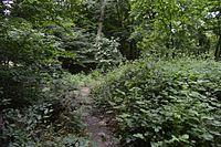 Crowsheath Wood 1.jpg