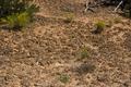 Cryptobiotic soil crust in Natural Bridges National Monument near Sipapu 20100906 - number 5.png
