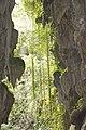Cueva del Indio-Grotte de l'indien-8.jpg