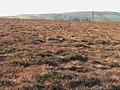 Cumbrian moorland - geograph.org.uk - 609247.jpg