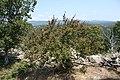 DÜZORMAN CASTLE . DÜZORMAN KALESİ - panoramio (5).jpg
