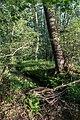 Dülmen, Naturschutzgebiet -Franzosenbach- -- 2014 -- 0186.jpg