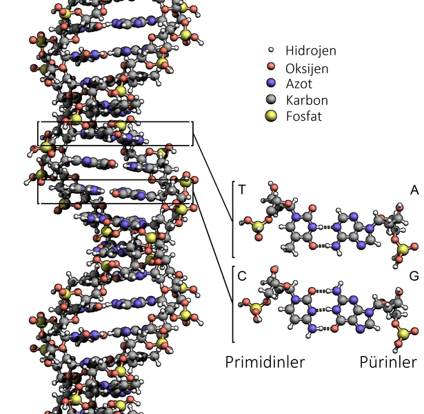 an in depth synopsis of the dna deoxyribonucleic acid Cro contract research organizations 11 dna deoxyribonucleic acid 12  these are frequently based on the synopsis and ideas of  case studies are in-depth.
