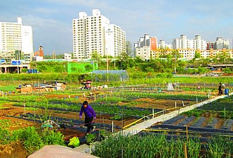 Gunpo - Urban and rural lifestyles combine in the heart of Daeya-dong.