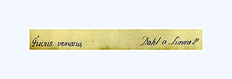 "Anders Dahl - Catalog strip from the former Linnaeus ""herbarium parvum"", in Dahl's handwriting. Ca. 1783"