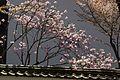 Daigoji (3472628366).jpg