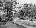 Dankvart Dreyer - A Road in a Forest - KMS1680 - Statens Museum for Kunst.jpg