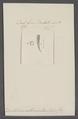 Dentalium abbreviatum - - Print - Iconographia Zoologica - Special Collections University of Amsterdam - UBAINV0274 081 10 0039.tif
