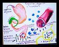 Digestión, absorción y metabolismo de ácidos grasos.jpg
