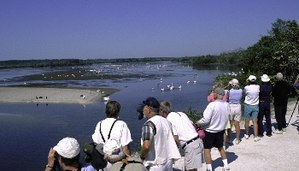 "Birdwatching - Birdwatchers at J.N. ""Ding"" Darling National Wildlife Refuge, Sanibel, Florida"