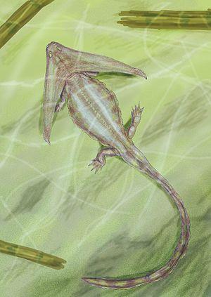Diplocaulidae - Diploceraspis burkei