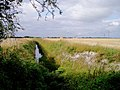 Ditch across Teversham Fen - geograph.org.uk - 38508.jpg