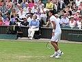 Djokovic WIM2010.jpg