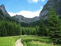 Dolina Małej Łąki.