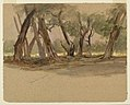 Drawing, Cypress Trees, Chapultepec, Mexico, February 18, 1892 (CH 18369089).jpg