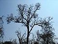 Dry season masanagudi tamilnadu - panoramio.jpg