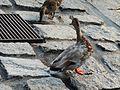 Duck Lake Como 2.jpg