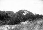 ETH-BIB-Bachvegetation am Makungu-River-Kilimanjaroflug 1929-30-LBS MH02-07-0457.tif