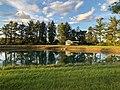 Early Pond.jpg