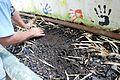 EarthwormChonita01.JPG