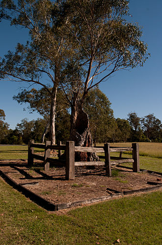 Ebenezer, New South Wales - Tree where the early services were held