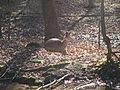 Eberswalde zoo 023.jpg