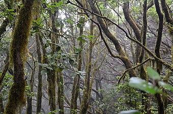 El Pijaral - Bosque encantado.jpg