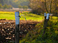 Electric fence-poles and wires.jpg