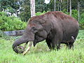 Elephant-IMG 3280.JPG