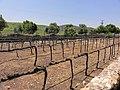 Ella Valley winery - panoramio (3).jpg