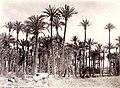Elx palmeres 1870, J. Laurent.jpg