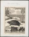 Emys europaea - 1700-1880 - Print - Iconographia Zoologica - Special Collections University of Amsterdam - UBA01 IZ11600115.tif