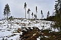 Eventyrskog hogget 9 km folkestier Øverbymarka Mjøsen skog blå rute mann.jpg