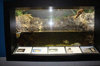 File Exhibit 1 Center For Marine Education