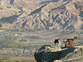 Explosive sniffer dog watches over the Bamiyan Valley, Afghanistan.jpg
