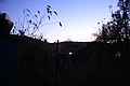 FOREST EVENING ........ (2011-11-07 18-33) - panoramio.jpg