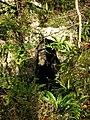 Fairy Hole - geograph.org.uk - 1586379.jpg