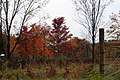 Fall Foliage in Laurel Mountains - panoramio (15).jpg