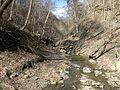Fall Run Park in Shaler Township, late winter - 19.jpeg