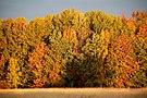 Fall foliage at Missisquoi National Wildlife Refuge (9965485026).jpg