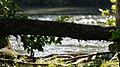 Fallen Tree by the Thames River - London, Ontario.jpg